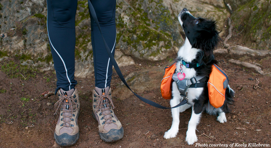 a young dog with a dog pack on, staring up at its hiking companion