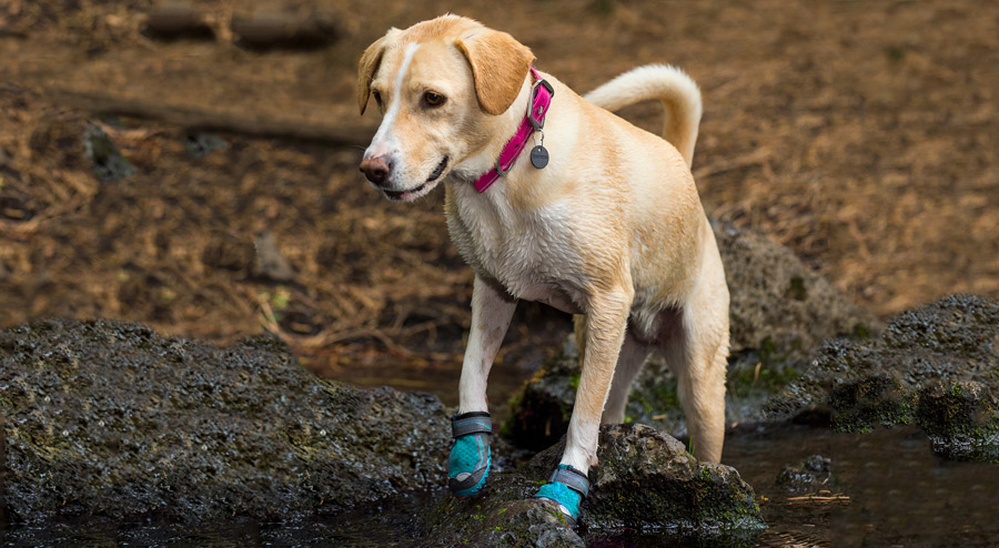a dog wearing booties on their paws