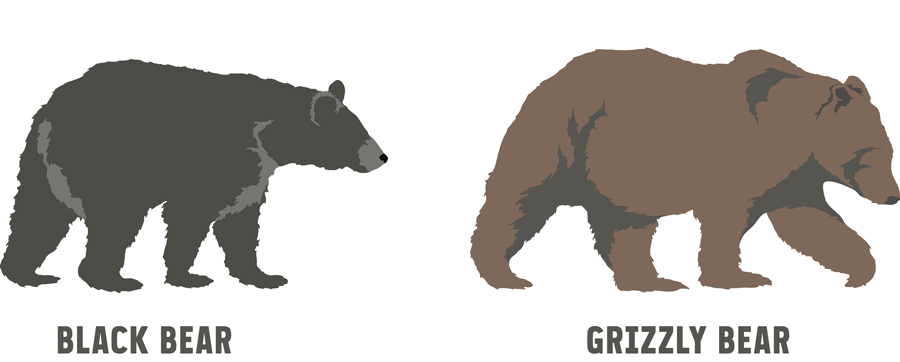 illustration of a black bear and grizzly bear
